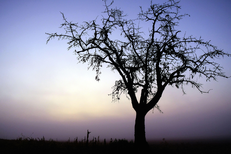 Tree Sunrise Alsace