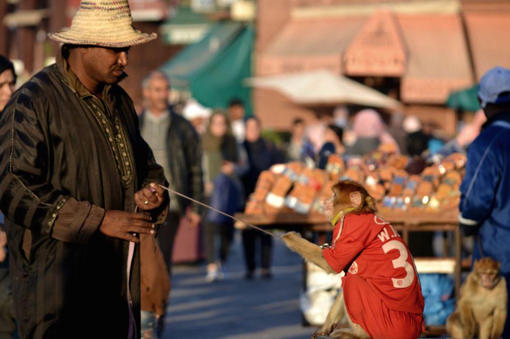 Monkey & Man, Prendre le temps d'une plongée immersive place Jamaa el Fna, Marrakech